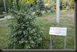 P1510987 als Anerkennung des Völkermords 1914 gg die Armenier gepflanzt